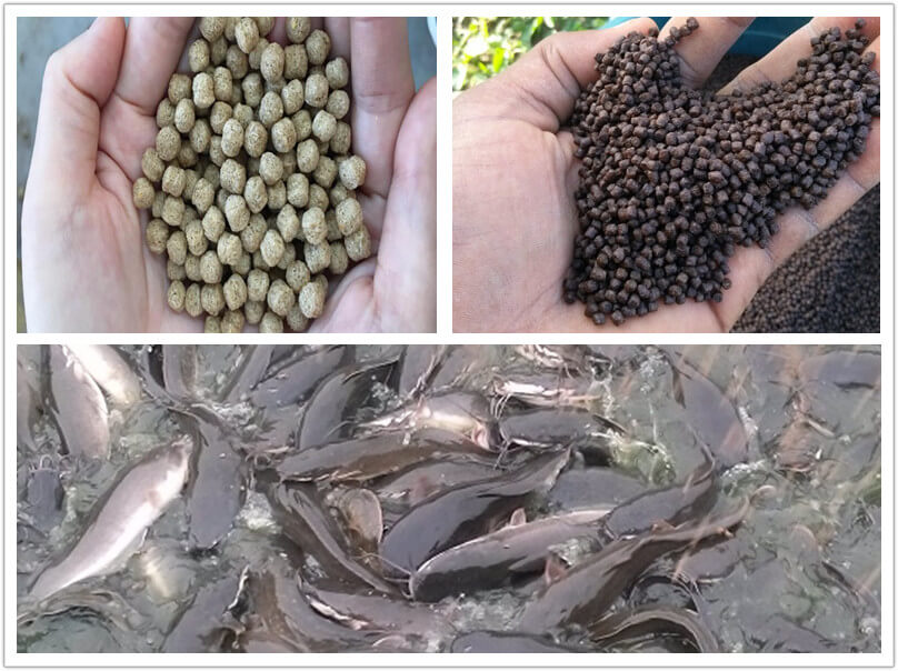 What Feed Size to Give Your Catfishes?
